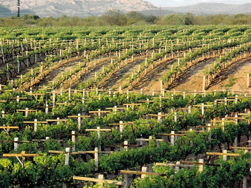 Mexico Wines
